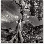 Book Cover: Beth Moon's Ancient Trees