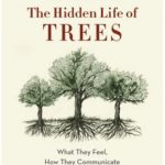 Book Cover: The hidden life of trees
