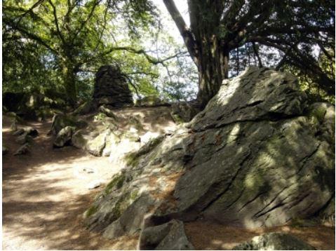 Rock Rose Garden Path
