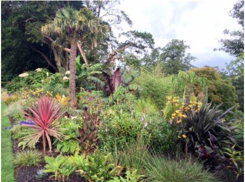 The Jungle Garden of Blarney Castle